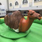 Rodeo Aufsatz Kamel